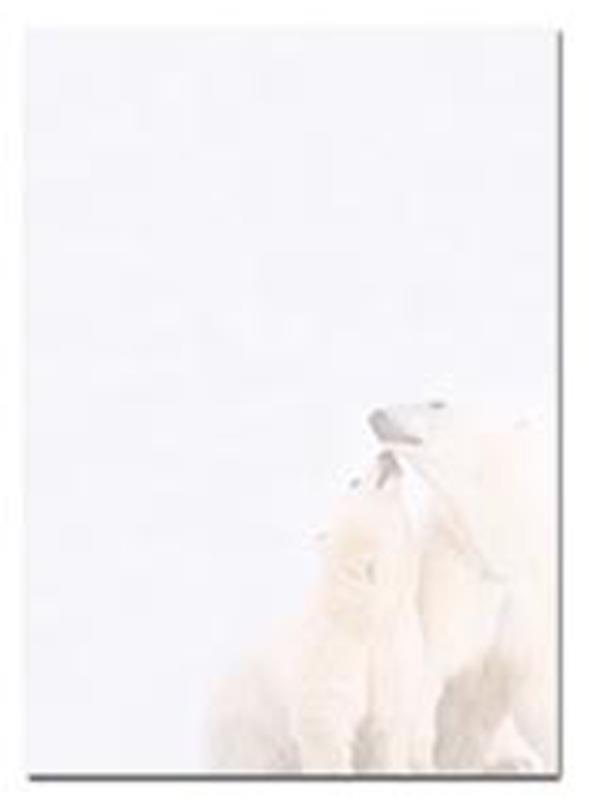 Next Προτυπωμένο χαρτί Α4 polar bear 100γρ. 25φ. 06961------3